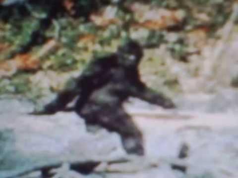 Paterson-Gimlin Film Frame #352==Bigfoot