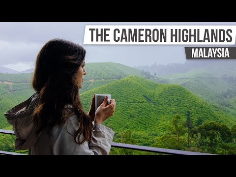THE CAMERON HIGHLANDS | Malaysia & Singapore #2