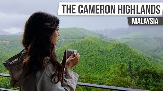 THE CAMERON HIGHLANDS | Malaysia & Singapore #2
