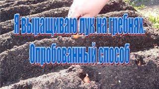Как вырастить лук на гребнях (китайский способ)