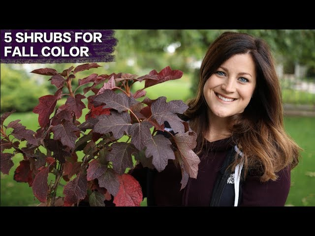 5-awesome-shrubs-for-fall-color-garden-answer