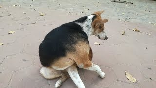 Dog / Dogs / Dogs Playing / Funny Dogs Playing / Cute Dogs 2020 / Funny Dogs Videos 2020