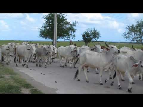 On the road to Don Lino - Holguin Province Cuba