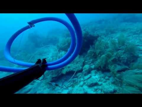 FAU Spearfishing Club Key West 2014