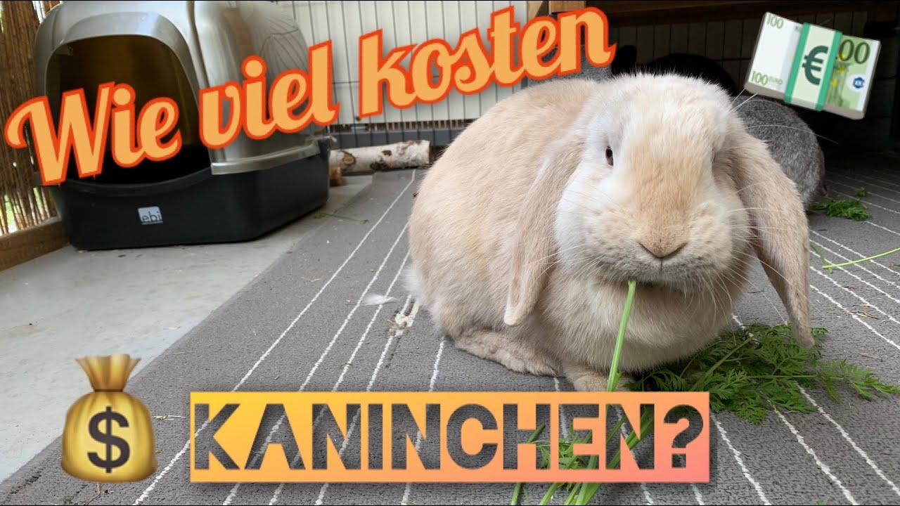 Wie viel kosten Kaninchen? | Stupsnasenbande - YouTube