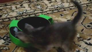 Котёнок по имени Сэм