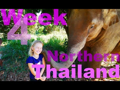 Northern Thailand with Kids - VLOG - Elephants, Night Markets and Ginger Farm