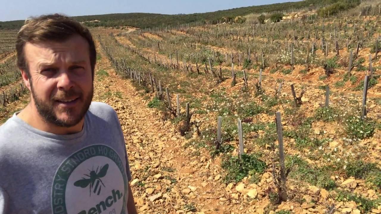 Cédric Gravier of Gomaine la Suffrene on sustainable wine making in Bandol  - Sustainable Wine