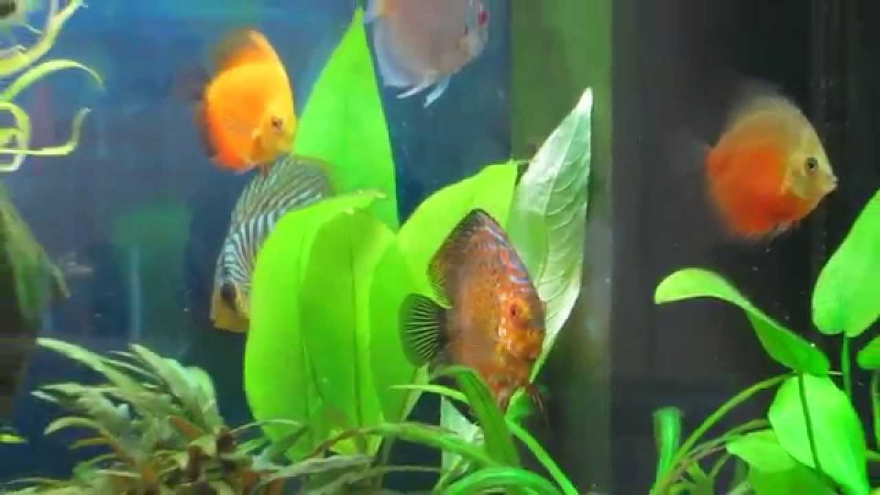 Juwel rio 240 aquarium fish tank - Juwel Rio 240 Aquarium Fish Tank