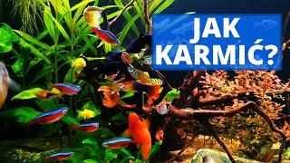 Jak karmić ryby? Jaki POKARM? Jakie DAWKI? Czy robić GŁODÓWKI? #11