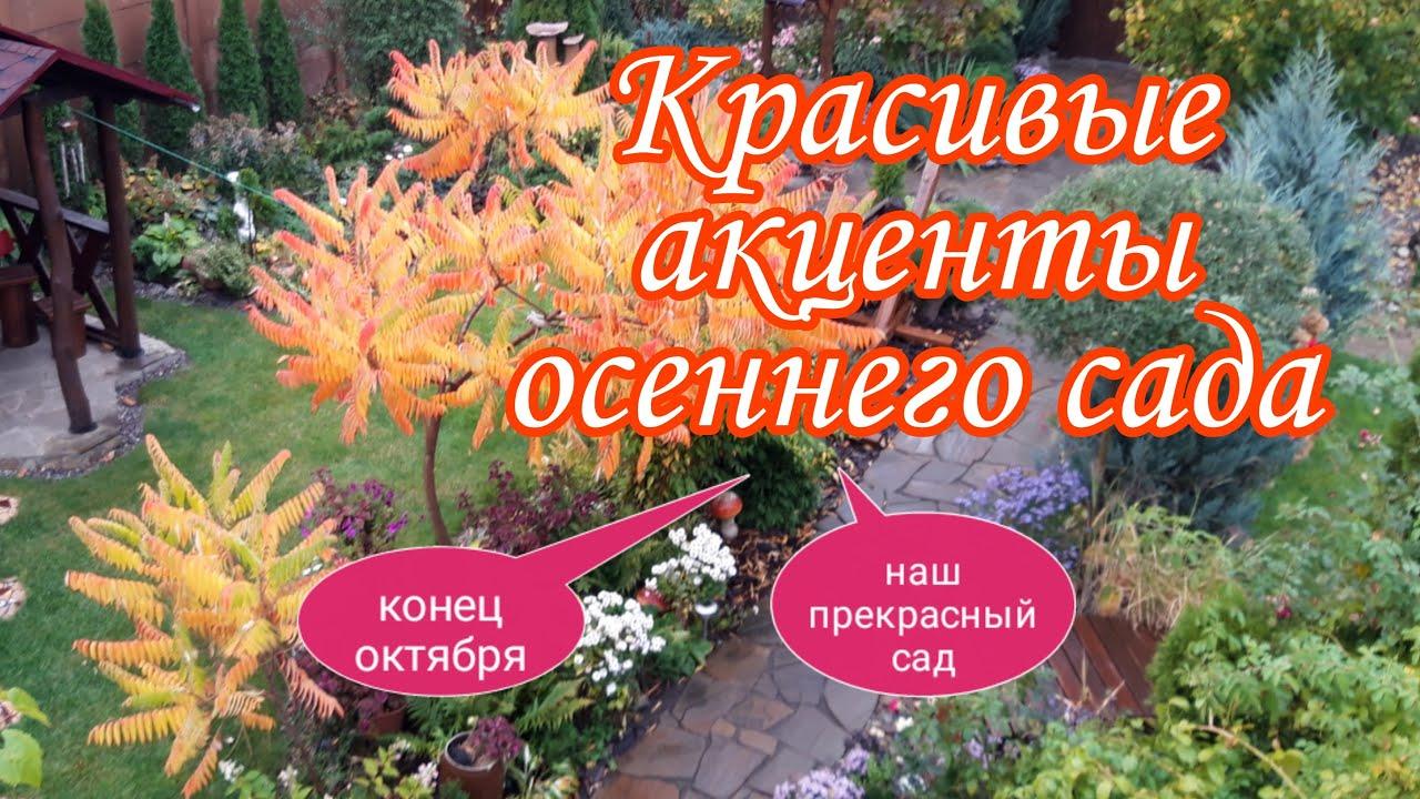 Красивые акценты осеннего сада.Красивые сочетания растений.Наш прекрасный сад своими рукамиНаша дача