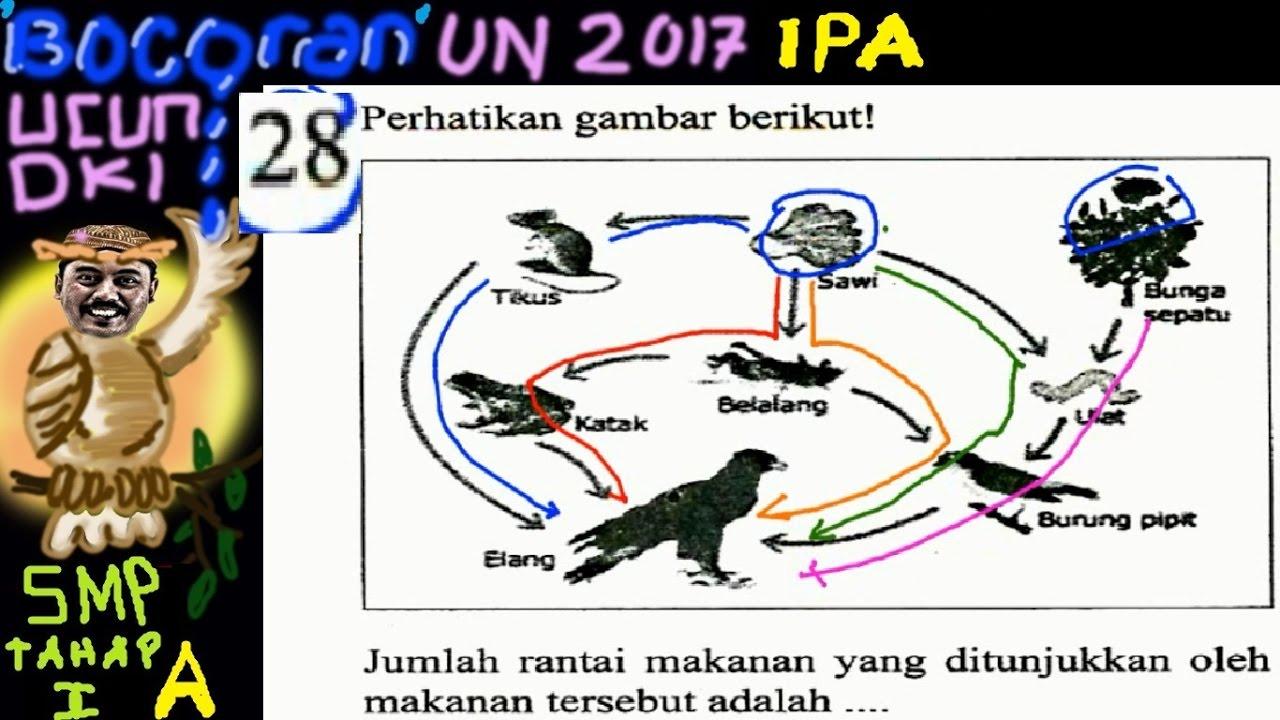 Un Smp 2017 Ipa Bocoran Prediksi Ucun Dki Tahap I A No 28 Jaring