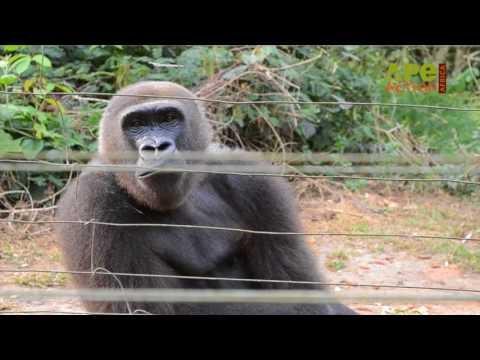 Meet Ape Action Africa's Director, Rachel Hogan  Moas Eran - Eran Moas