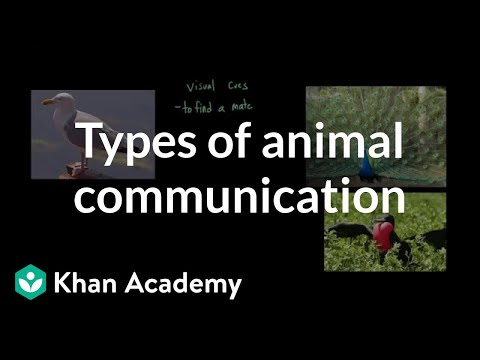 Types Of Animal Communication | Individuals And Society | MCAT | Khan Academy