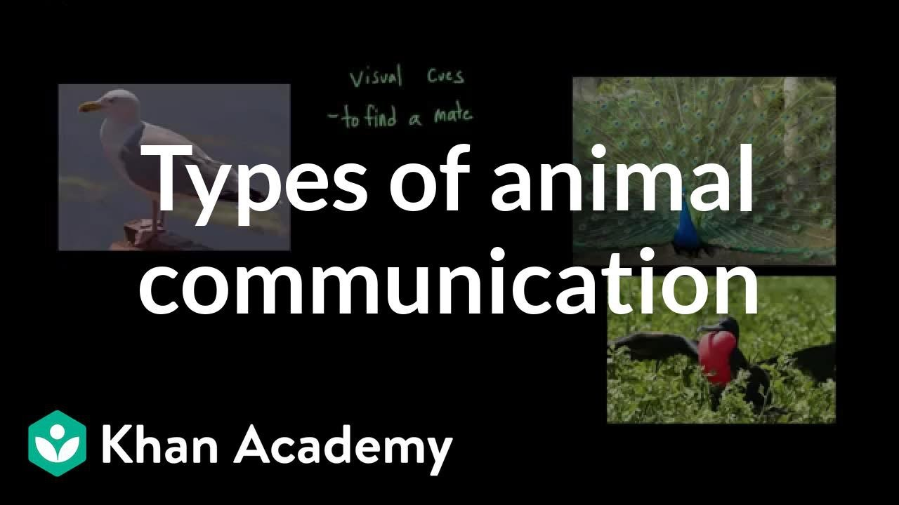 Types of animal communication (video) | Khan Academy
