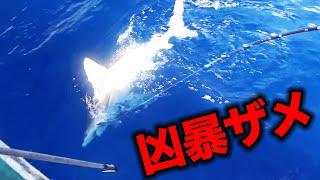 釣り初心者に凶暴なサメがヒットしました