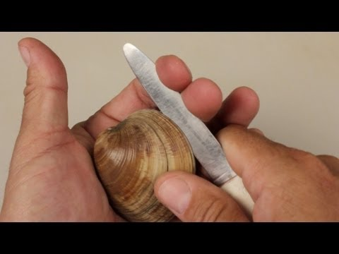 How to Open Clams