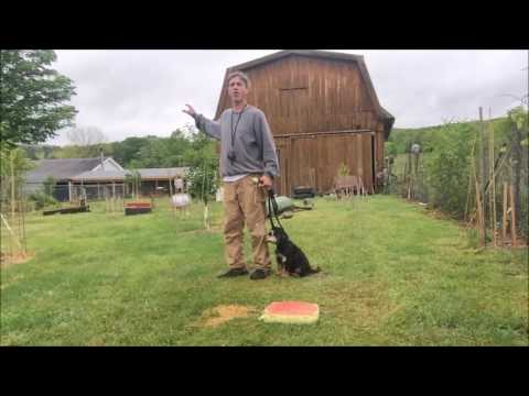 Test Puppy's for Off Leash, How to get Dog Off leash Heel