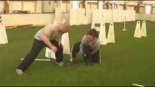 Staffy Flyball Training (staffordshire Bull Terrier)