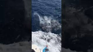 2020 Bisbee's East Cape Offshore | Quitena | Striped Marlin