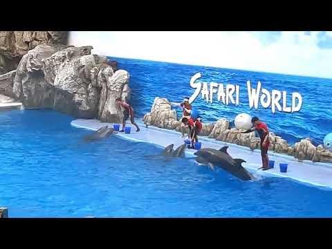 Dolphin Show 🐬 amazing Safari World, Thailand