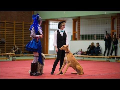 Tavaszköszöntő Dog Dancing verseny - Hobby quarett