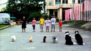 Waggie Dog Training Video - Singapore