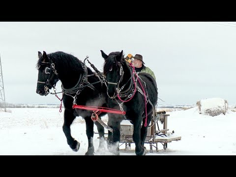 Handmade Horse Harnesses
