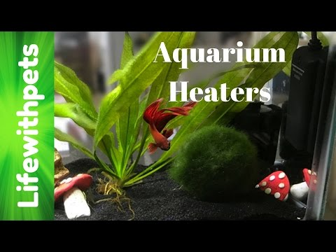 What Betta Fish Heaters Do We Use?