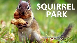 Squirrel Play Time With Crazy Red Doberman Pinscher And Toddler, Park Peanuts Chase Kids Video Funny