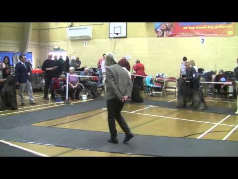 Afghan Hound Club of Wales 2014 -  Dog Challenge