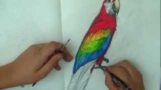 speed drawing - painting of  a parrot