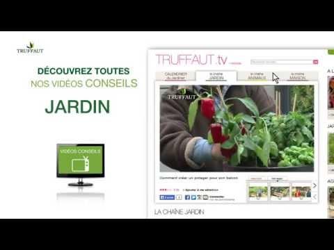 Truffaut.tv : Les Conseils Vidéo Jardin, Animaux Et Maison - Jardinerie Truffaut TV
