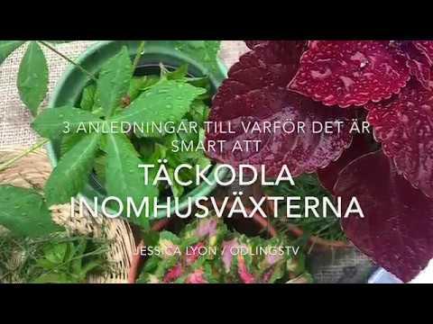 3 Anledningar Till Att Täckodla Krukväxterna Inomhusväxterna