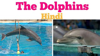 The Dolphins - Hindi -Carrol Ann Duffy - line to line clear explanation