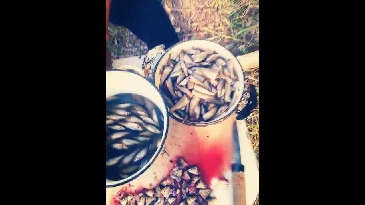 Ловля и готовка гольяна. Охота и рыбалка в Якутии
