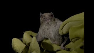 The Science of Speciation – Molecular Adaptation in Vampire Bats