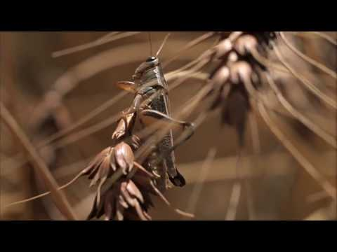 Ae  Infects Host - Autechre | Terrence Malick