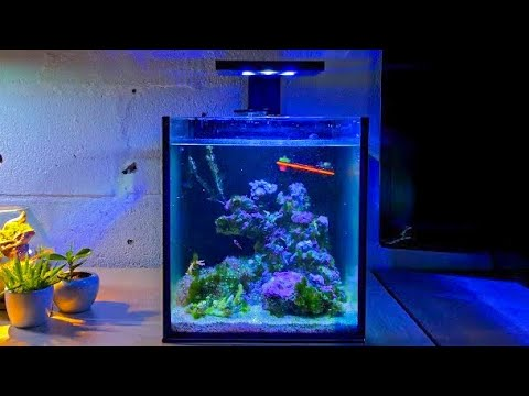 Aquarium Algae - Nano Reef Tank No Skimmer