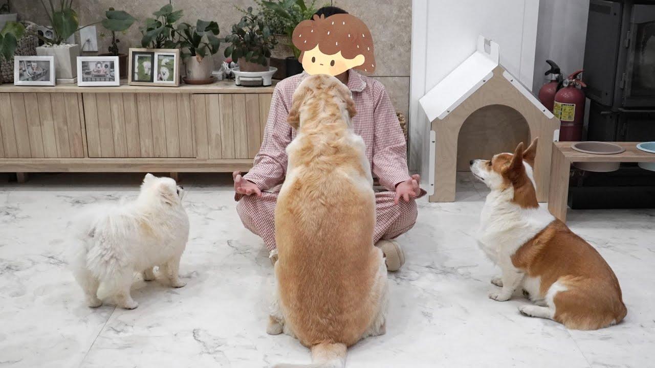 강아지 앞에서 명상하기 | Meditating in front of dogs