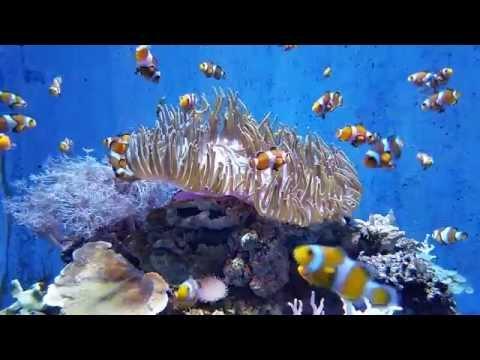 L'Aquarium Barcelona November 2015 no 2