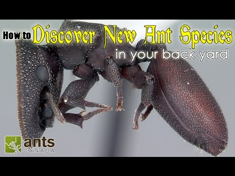 Thumbnail: HOW TO DISCOVER A NEW SPECIES OF ANT | featuring Dr. Brian Fisher