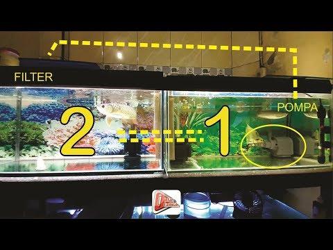 2 Aquarium 1 Filter Hemat Listrik