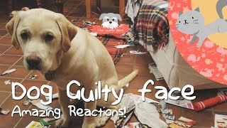 Amazing Guilty Face Reactions  Guilty Dogs Video Compilation 2020