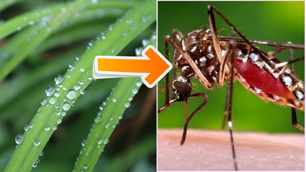 Tiba asili ya Malaria