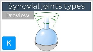 Types of synovial joints (preview) - Human Anatomy | Kenhub