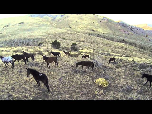 Wild Horses - Virginia Range, Nevada
