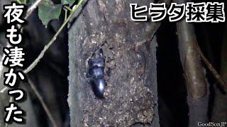 河川敷ヒラタクワガタ採集【昆虫採集・カブトムシ・クワガタ】