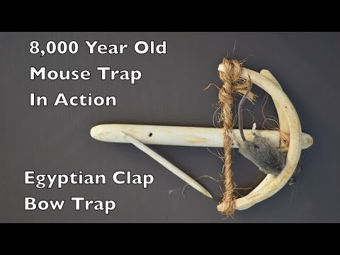8000 Year Old Style Mouse Trap. The Egyptian Clap Bow Trap In Action.