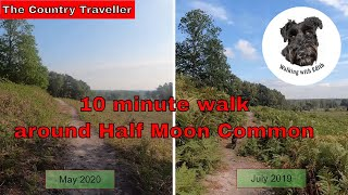 The New Forest - Half Moon Common walk May 2020 - birdsong, no music